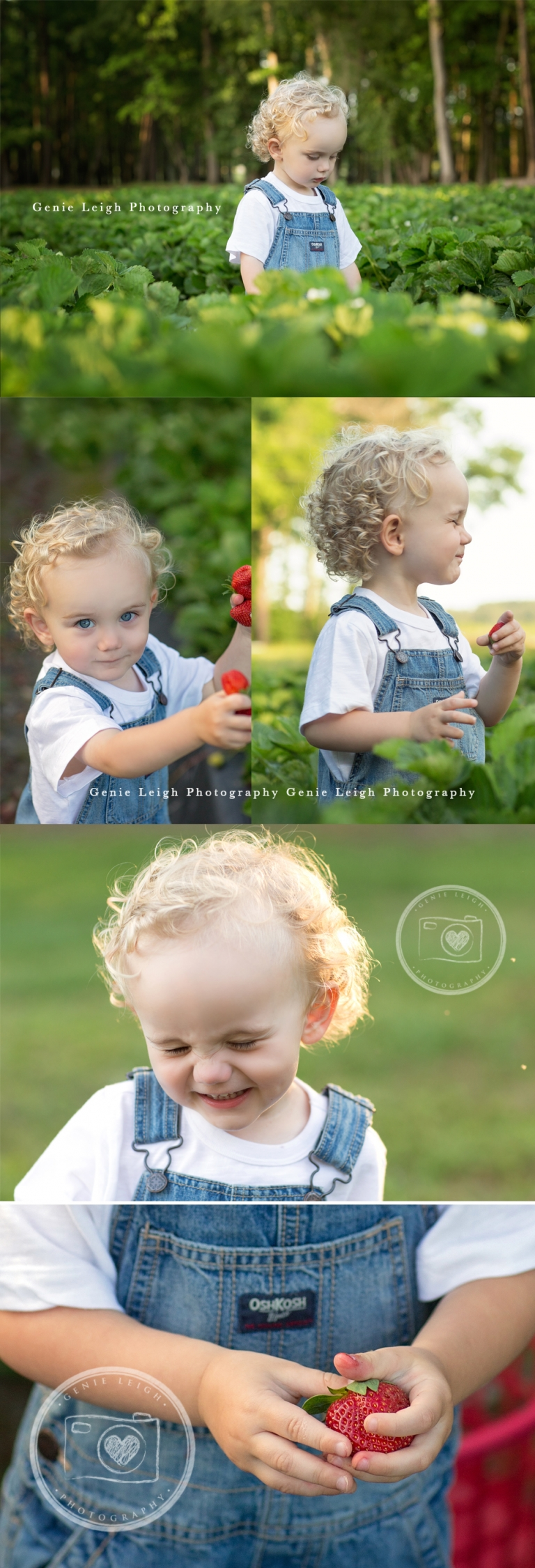 Genie Leigh Photography On The Farm Child Portrait Photographer Converse Sneakers Child Tractor Strawberry Field